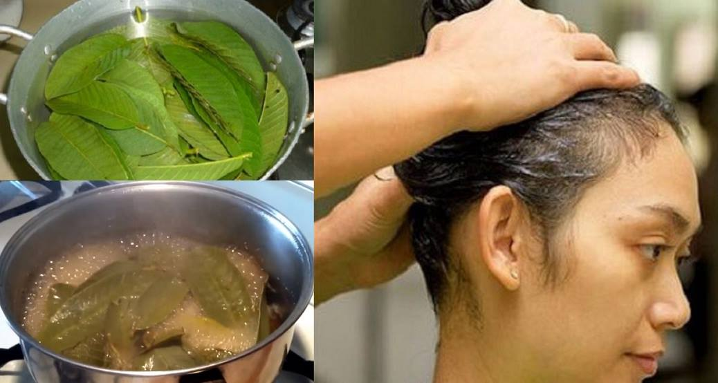 Here's How To Use Guava Leaves To Stop Hair Loss
