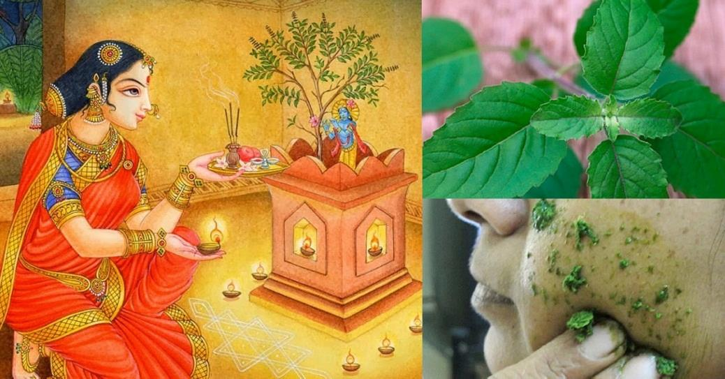 15 Proven Health And Beauty Benefits Of Tulsi (Holy Basil)