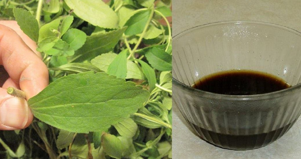 Want To Quit Smoking Easily? This Herb Will Instantly Destroy Your Desire To Smoke