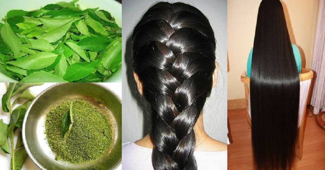 uses of curry leaves for hair